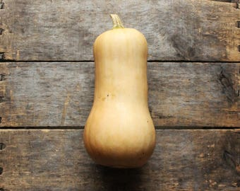Waltham Butternut Squash, heirloom squash seeds, organic vegetable seeds, gardening, organic vegetable garden, gardener, winter squash