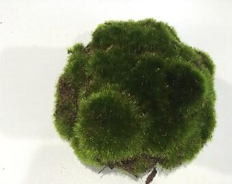 Fairy Garden Moss Mounds