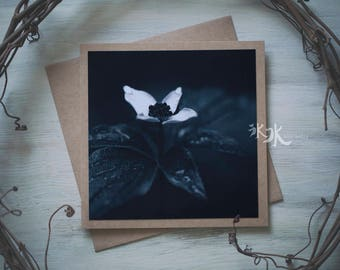 Floral Photo Card - Cornus canadensis - Less colors, more feelings..