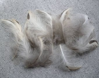 20 gray feathers and natural white from 6 to 8 cm.
