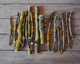 Set of Lichen branches, lichen sticks, twig craft, woodland decor, nature craft supplies, florist supply, yellow moss, decorative branches