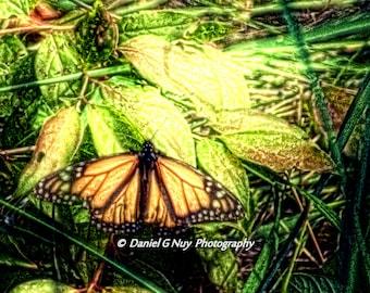 Butterfly Dreams - 11x14 Fine Art Photo