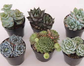 9 sets os Premium Party Favors - Collection of 8 Double and Triple Plants