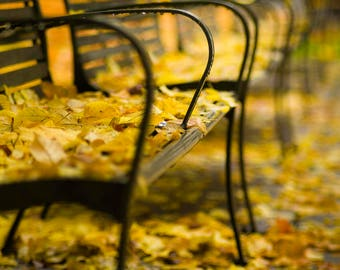 Park benches with autumn leaves in Portland Oregon--fall photography--art print