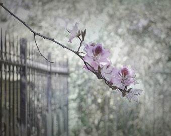 Fence with Flowering Branch - Jerusalem Hills - Fine Art Photograph