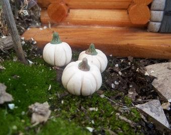 6 Fall Fairy Garden miniature pumpkins in  white