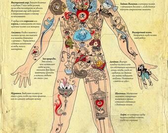 Human anatomy through the eyes of fairy creatures