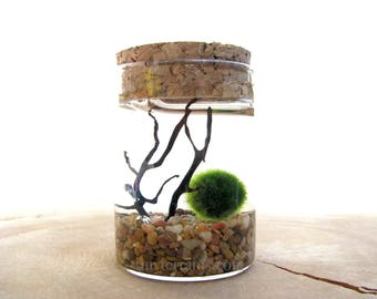 Marimo Terrarium Kit Japanese Marimo Moss Ball Terrarium Kit Tiny Glass Corked Jar Customize  Home Decor
