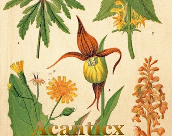 AC10014 Antique original lithography 1918 wood flowers herbs flora botany woodpecker nuksack yellow archangel  chromolithography