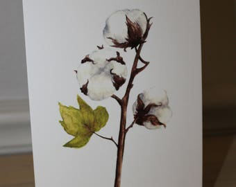 Cotton Blossom 5x7 Watercolor Print