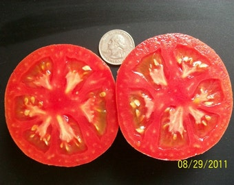 Heirloom Tomato- EARLY WONDER- 55 day rosy pink Determinate- 25 seeds