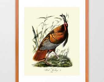 Turkey - Wild Turkey Poster -  Audubon Art - John James Audubon Art Print
