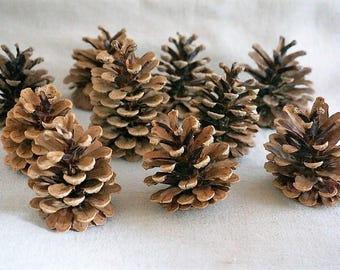 Large pine cones