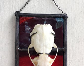 Mink Skull Wall Mount