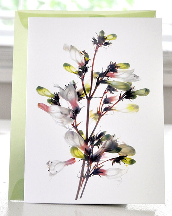Floral Artist Greeting Card Margie's Whites. Free US Shipping