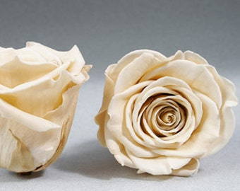 Preserved* Champagne Roses, Preserved Roses, Roses for Bouquet, Prom Roses, Preserved Rose Bouquet  Simply Beautiful !