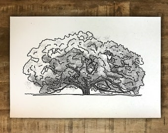 The Big Oak - Thomasville, Georgia - Print - Multiple Sizes - Original Illustration