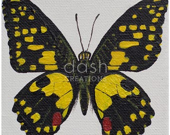 Taxidermy Inspired Butterfly Print - Lime Butterfly (Papilio Demoleus)