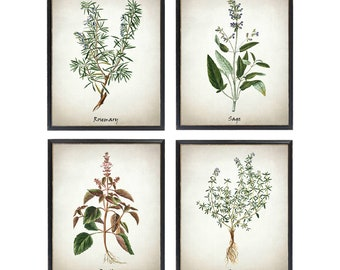 Printable Herb Set of 4, Rosemary Sage Basil and Thyme Vintage Illustrations, Culinary Herbs Kitchen Art Digital Prints INSTANT DOWNLOAD