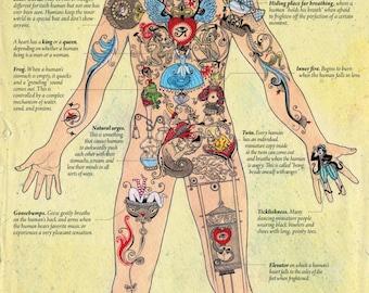Human anatomy through the eyes of fairy creatures (English version)
