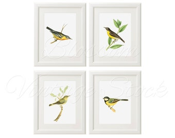Bird Print Set INSTANT DOWNLOAD Digital Images, Vintage Illustrations for Print - 5x7, 8x10, 11x14 Included - 1242