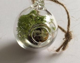 Hand Blown Moss Terrarium Hanging Ornament