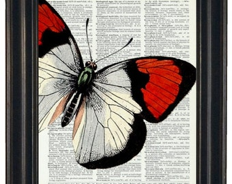Butterfly Art Print Butterfly Dictionary Art Print Book Page Butterfly 8 x 10 Upcycle Wall Art Vintage Dictionary