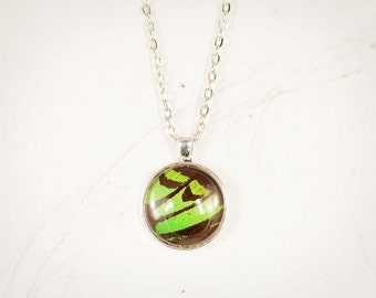 Real Butterfly Jewelry - Real Insect Jewelry - Neon Green Pendant - Green and Black - Lime Green - Silver Round Pendant