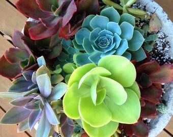 Customized Succulent Arrangement, succulent centerpiece, succulent garden