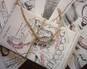 10 Odd Little Medical Gift Card Envelopes- Repurposed Grays Anatomy Pages