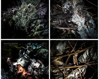 Alice In Wonderland | 4 metallic photo prints | Limited edition