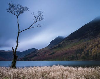 A Lone Tree on Buttermere Lake