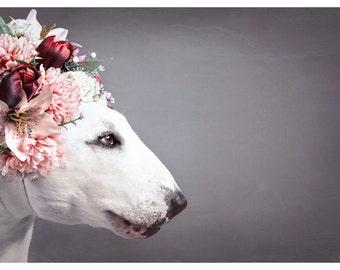 Flower Princess - Bull Terrier Photographic Art Print