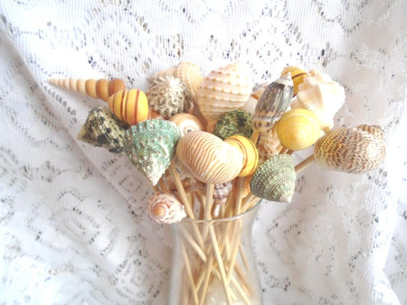 Large 6 Inch Seashells Toothpicks Cocktail Picks Skewers Sea Shell Beach  Wedding Purple Cowrie Spiral Conch Green Snail Photo Gallery