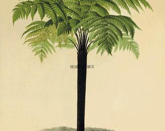 Vintage Floral Botanical Digital Download Printable Image Wall Art Palm Tree