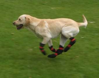 Dog boots Protect from stones, thorns, heat, cold, ice ball formation