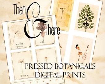 Pressed Botanicals Digital Print