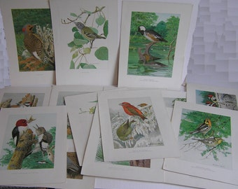 Louis Agassiz Fuertes Antique Bird Lithograph Prints Collection of 15 Circa 1910