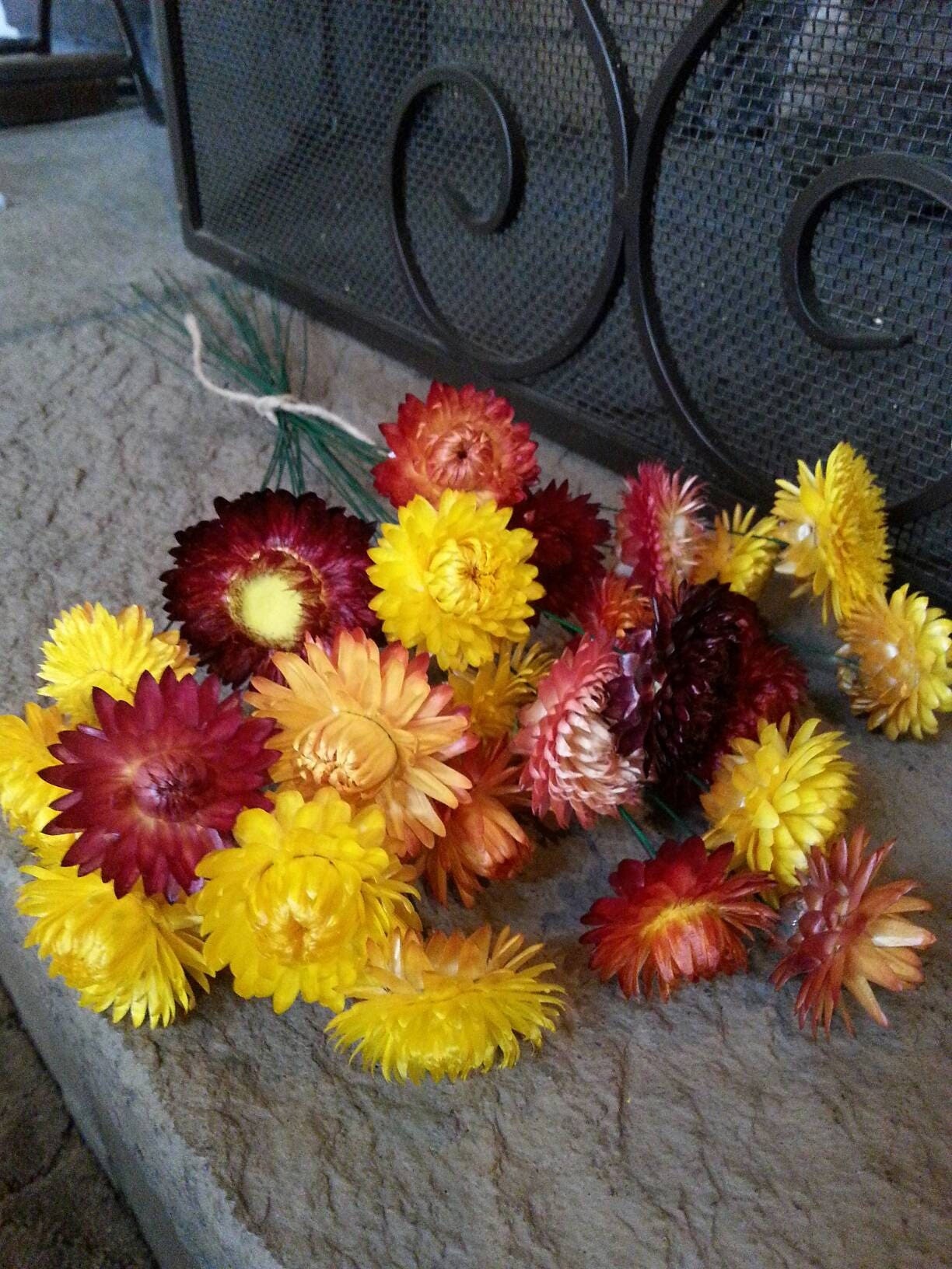 25 dried strawflowers in fall colors on green wire stems dried get shipping estimate mightylinksfo
