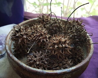 Witches Burrs / Sweet Gum Pods / Witches Burrs / Hoodoo Voodoo / Witchcraft Supplies / Craft Supplies / Natural Wild Harvested Eco Friendly