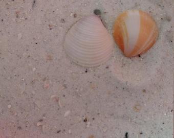 Sand CLEARWATER FLORIDA 1lb Bag Beach Sand Mix Zen-Fairy Garden Jewelry Coastal Wedding Decor