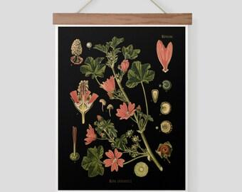Vintage German Botanical Illustration Pull Down Chart Malva Silvestris