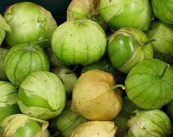 Physalis Ixocarpa -Tomatillo - 100 Seeds - Rio Grande Verde