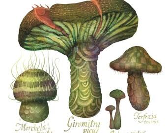 The Fungus Species III - A4 art print