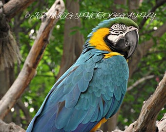 8x10 Print of a Beautiful Macaw Parrot