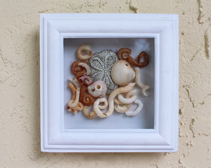SALE Seashell Beach Decor framed with glass by SEASTYLE