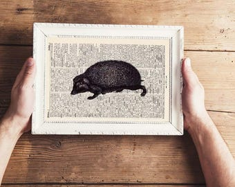 Pressure - HEDGEHOG - antique book page