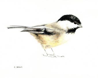 5 x 7 Chickadee Original Colored Pencil Sketch