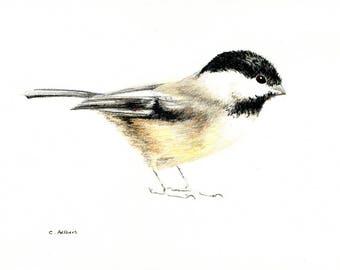 5 x 7 Chickadee Original Colored Pencil Sketch