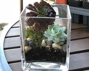 Square Vase Succulent Terrarium
